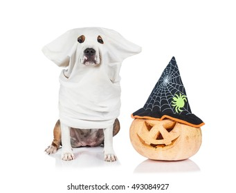 Funny dog dressed like a ghost sitting near a halloween pumpkin