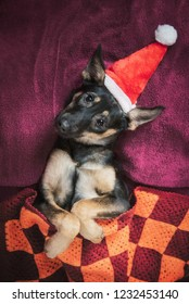 Funny dog dressed in santa's hat lying in the bed at christmas
