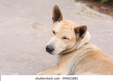 funny dog with eye closed
