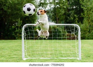 Funny dog flying in amusing pose catching football (soccer) ball and saving goal