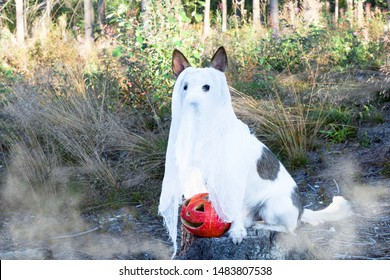 Funny dog in a ghost costume posing with pumpkins in an autumn park with leaves and fog in Halloween