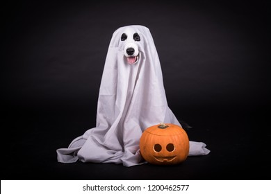 funny dog ghost with a halloween pumpkin in a photo studio