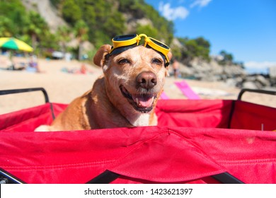 Funny dog with goggles at the beach