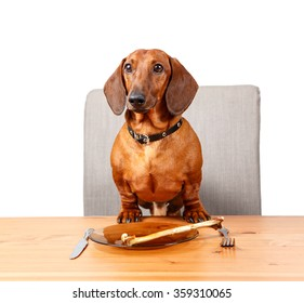 Funny dog having dinner at the table