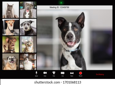 Funny dog holding conference call over internet with pet coworkers on video chat