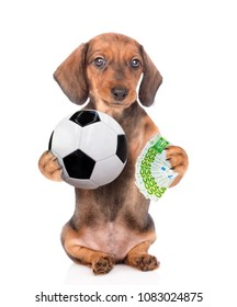 385ea5df94d Funny dog holding money and soccer ball in his paws. isolated on white  background