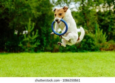 Funny dog in jumping motion catching ring toss toy