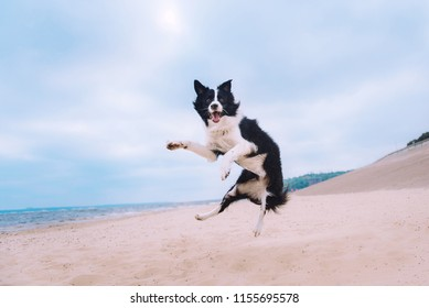 Funny dog is jumping on seashore beach