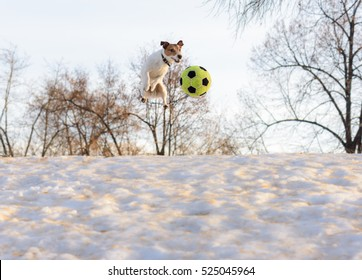 Funny dog jumping with soccer ball on ice snow