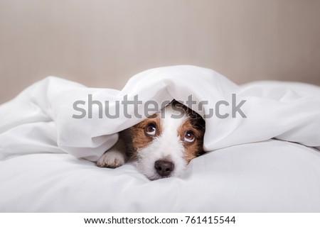 funny dog lying in