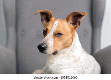 Funny dog on the armchair