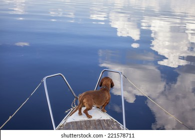 A funny Dog on a boat for a ride. Looking to the cloud`s reflection in the water