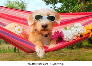 Funny dog on vacation in hammock siwth sunglasses head,and flowers