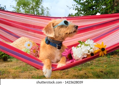Funny dog on vacation in hammock wearing  sunglasses head,and flowers
