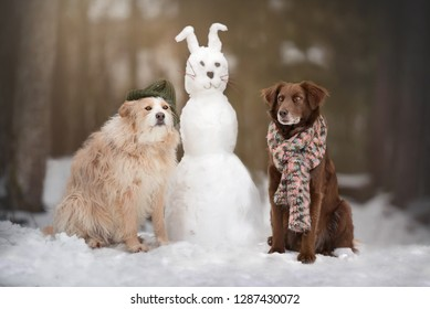 fa9599efbcb07 Funny dog photo. Two dogs with a snow rabbit. Dogs are wearing a beanie
