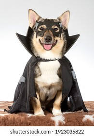 Funny dog picture. Dog wearing halloween costume with mask. Copy space. Funny dog greeting card concept image.