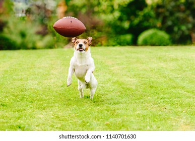 Funny dog playing with american football ball at backyard lawn