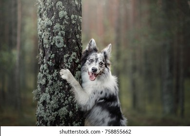 funny the dog put his paws on the tree