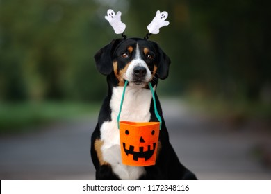 funny dog ready for halloween