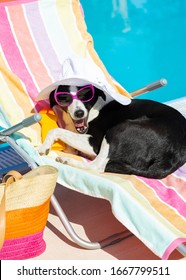 Funny dog resting and relaxing on a deck chair and yawning on summer vacation at swimming pool.
