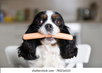 Funny dog with sausage in mouth