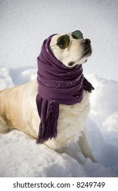 Funny dog with shawl and sunglasses