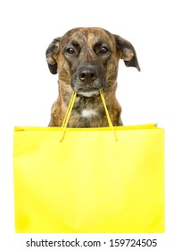 funny dog with shopping bag. isolated on white background