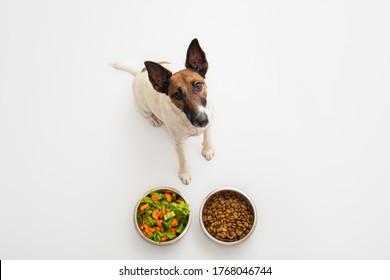 Funny dog and two bowls of natural vegetables and regular dog food, studio shot. Dog nutrition, pet diet concept: dog chooses between vegetables and dry food