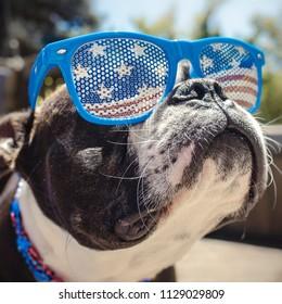 Funny Dog Wearing American Flag Sunglasses