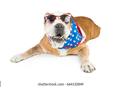 Funny dog wearing American patriotic  bandana and sunglasses. Isolated on white.