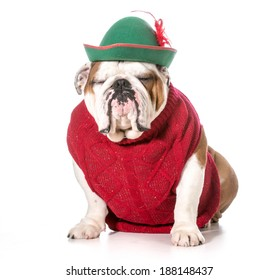 funny dog wearing red sweater and green hat