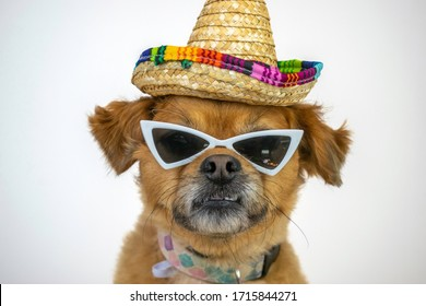 Funny dog wearing sombrero and sunglasses on white background