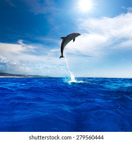 Funny Dolphin Leaping From Blue Water. Wildlife postcard design