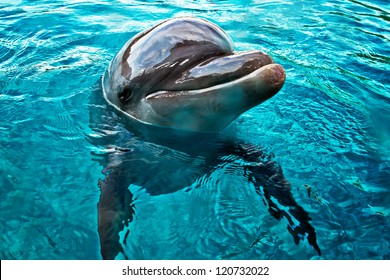 funny dolphin swimming and smiling closeup in bright blue sea water