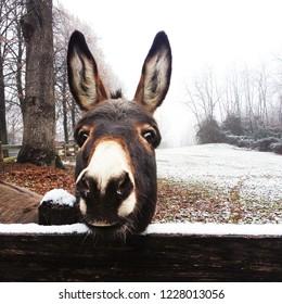 Funny donkey at farm in winter. Farm animals