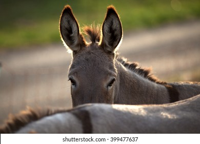 funny donkey with his friend