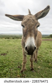 Funny donkey with long big ears