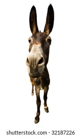 funny donkey with long ears