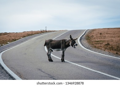 Funny donkey on Transfagarasan road in Romanian mountains, stupid donkeys and assholes on the roads