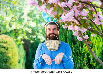 funny Easter egg hunt. Humorous series of a man in bunny suit. Good for Easter or ironic situations