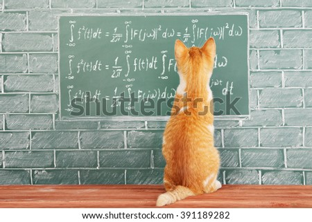 Funny education idea with red cat