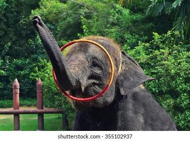 funny elephant, elephant hula hooping, circus