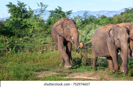 Funny elephant playing in a natural park of sri lanka