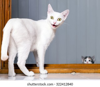 Funny evil white cat with open mouth. Funny Crazy Cat. Mad Cat
