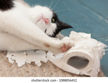 funny face of a black and white cat lying on white carpet over blue linoleum playing with a roll of toilet paper