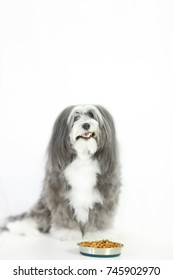 A funny face  expression on a dogs face with a bowl of food on a white isolated background.