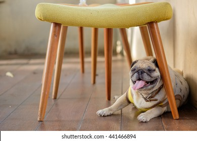 Under The Chair Images Stock Photos Amp Vectors Shutterstock