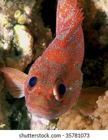 funny faced fish