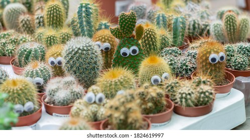 Funny faces of prickly potted cactuses with eyes. Different cacti in flowerpots on plant store counter. Selective focus
