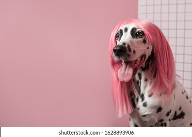 Funny fashion dalmatian dog in pink wig. Hairstyle party concept. Dog looks left. Pink background. Copy Space